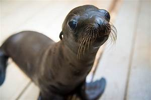 Max The Sea Lion Pup Is Starting Swim Lessons And It Turns ...