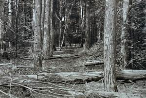 Forest Drawing III - 2013. Graphite Pencil on Cartridge Paper