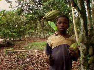 trafficking on Cocoa farms | Multi Cultural Cooking Network