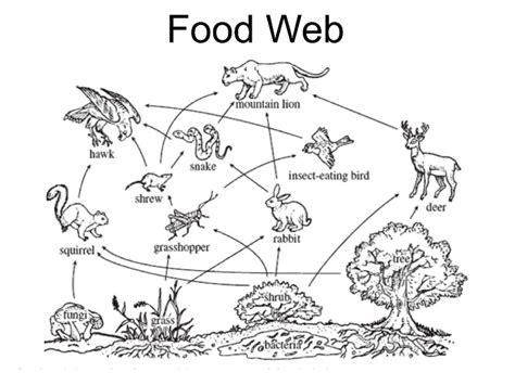 web cuisine desert ecosystem organisms engine diagram and wiring diagram