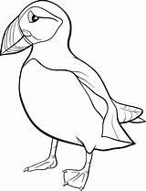 Cartoon Puffin Coloring Papegaaiduiker Macareux Pulcinella Kleurplaat Rock Colorare Bird Coloriage Disegno Dessin Moine Stockillustratie Template Flynne Depositphotos Mare Anime sketch template