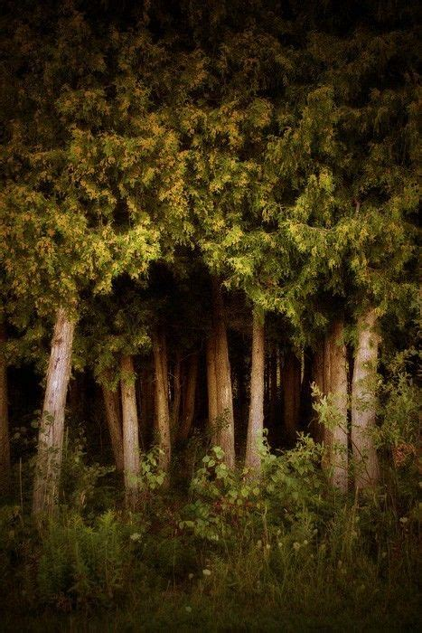 Tree Print Deep The Woods Fine Art Photograph