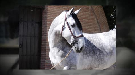 horse breeders andalusian