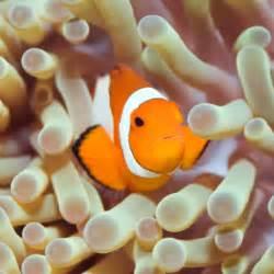 do shrimp shed do cleaner shrimps shed their shells saltwaterfish