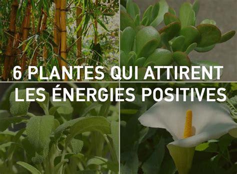 plantes pour chambre les 25 meilleures idées de la catégorie feng shui chambre