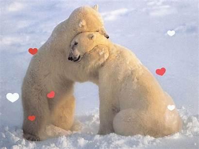 Hug Bear Gifimage