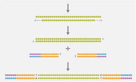 Illumina Sequencing Service Next Generation Sequencing Services