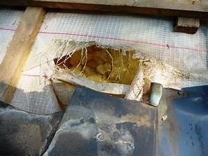 Spatzen Nisten Unter Dachziegeln : marderschaden auf dem dach kleiner kerl mit gro er ~ Lizthompson.info Haus und Dekorationen
