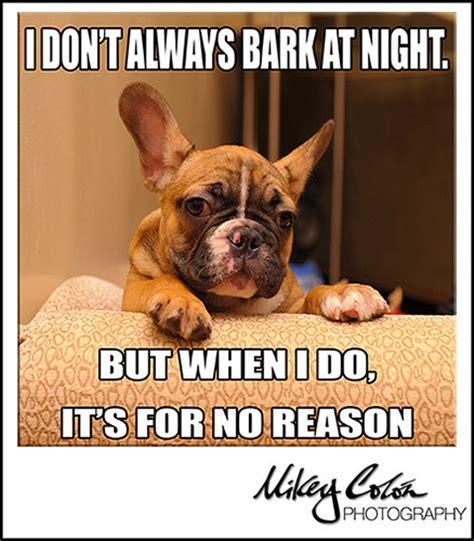 Bulldog Meme - funny french bulldog meme