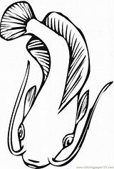Catfish Coloring Pages Fish Printable Minecraft Template Coloringpages101 Realistic Adults sketch template