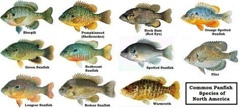 major types  freshwater fish   bones