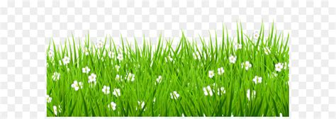 lawn clip art transparent grass  white flowers