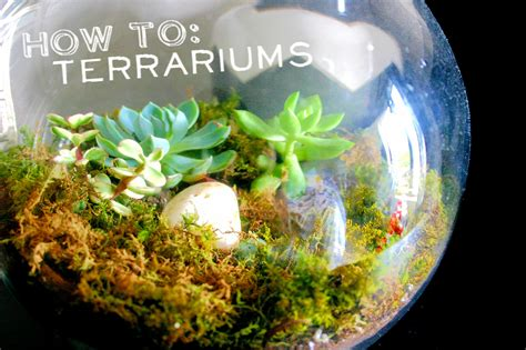 terrarium how to how to build a terrarium brick vine