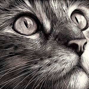 Cats face - scratchboard art - this artist must be really ...