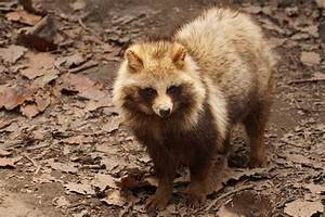 From Cute to Scary: 3 Common Animals in Japanese Wildlife ...