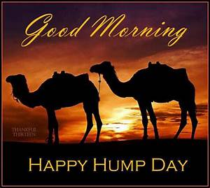 Good Morning Happy Hump Day Camels good morning wednesday ...