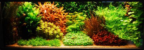 Style Aquascape by Aquarium Aquascape A Style From The 1930s