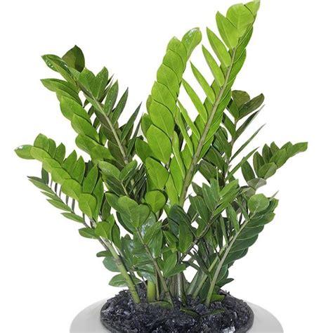 piante e fiori d appartamento piante appartamento fiori piante piante d