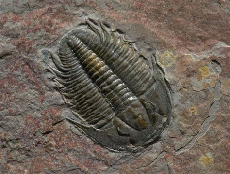 Cast Fossil Mold Definition