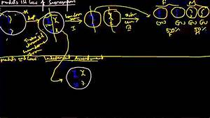 Mendel U0026 39 S 1st And 2nd Law  Simple Explanation For Human