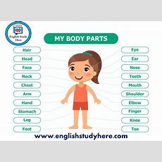 My Body Parts Names In English  English Study Here
