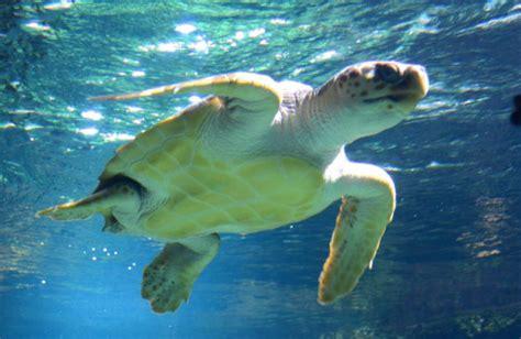 cing aquarium de la rochelle cing le clos des pins c 244 te atlantique de vend 233 e
