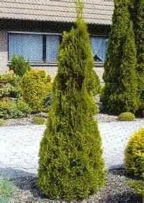 Thuja Smaragd Wachstum : teichbau ~ Michelbontemps.com Haus und Dekorationen