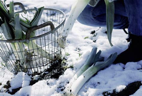 Hanfpalme Im Garten Winterfest Machen by Garten Winterfest Machen Winterschlaf Garten Im Winter