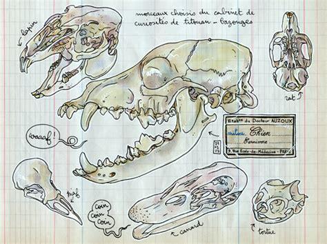 papier peint cabinet de curiosite les calepins de lapin cabinet de curiosit 233 s