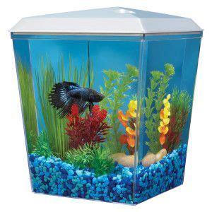 top fin bettascene  aquarium petsmart starting