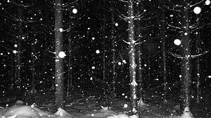 snowy forest at night | photo | Pinterest
