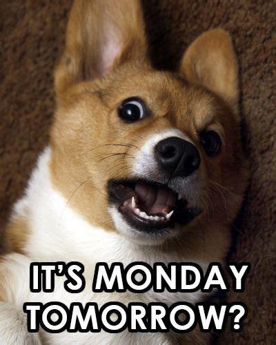 Its Monday Tomorrow Meme - it s monday tomorrow funny quotes quote sunday monday quotes sunday quotes tomorrows monday
