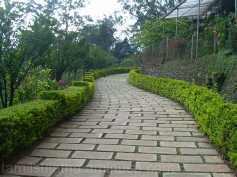 Flower Garden Munnar Kerala Plant Nature Photos Sv039s