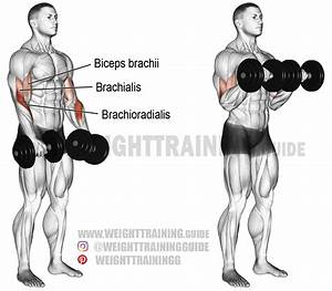 Dumbbell Reverse Curl Instructions And Video