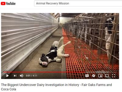 famous farm investigated  animal abuse caught  video