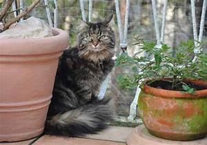 Kirschlorbeer Ungiftige Sorte : ungiftige pflanzen f r katzen mit fotos wichtigen hintergrundinfos ~ Orissabook.com Haus und Dekorationen
