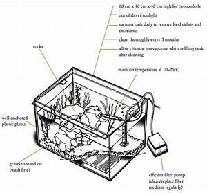Co2 Aquarium Diagram