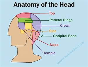 Salon  Anatomi Rambut   Pengetahuan Awal