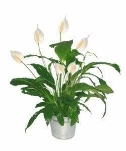 Plante Verte D Appartement : jardin entretenir les plantes fleurs d 39 appartement l ~ Premium-room.com Idées de Décoration