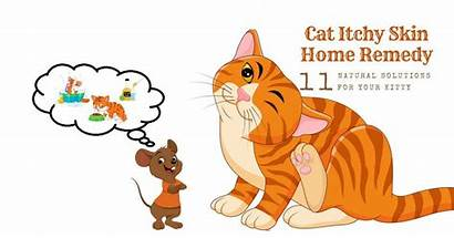 Skin Cat Itchy Remedy Problems Cats Solutions
