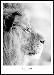 Tierbilder Schwarz Weiß : lejon tavla natur poster lejon ~ Markanthonyermac.com Haus und Dekorationen