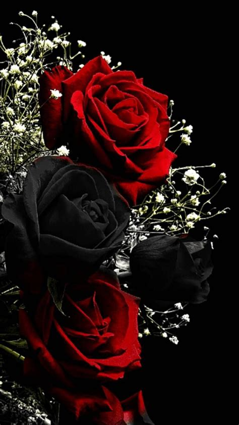 See more ideas about wallpaper backgrounds, iphone wallpaper, cellphone wallpaper. Download Red Black Roses Wallpaper by PerfumeVanilla - 12 - Free on ZEDGE™ now. Browse millions ...