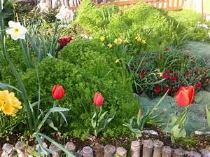 foto e info su accostamenti piante fiori Pagina 3 Forum di Giardinaggio it
