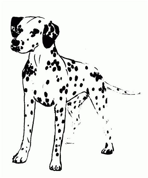 dalmatian dog coloring page coloring home