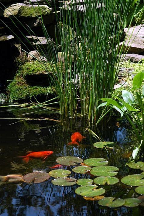 27 id 233 233 s pour le bassin de jardin pr 233 form 233 hors sol bassin de jardin pr 233 form 233 petit