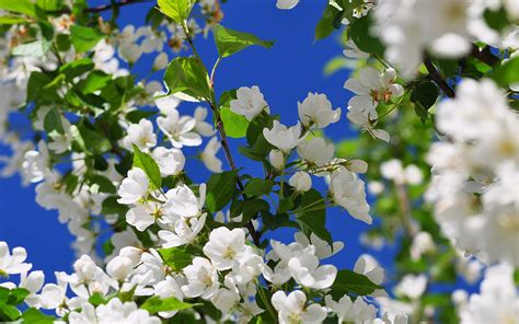 Beautiful Spring Flowers Wallpapers And Images