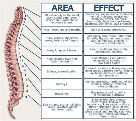 Best 25+ Symptoms Of Sciatica Ideas On Pinterest  Low. Law Enforcement Degrees Online. Comprehensive Outpatient Rehabilitation Facility. Quickbooks Tech Support Phone Number. Medical Insurance For Schengen Visa. Masters In Education Administration Online. Cheap Car Rental Malaga Airport. Test Data Management Software. Mortgage Refinance Texas Cheyenne High School