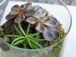 Succulentes Pas Cher : un terrarium pas cher faire soi m me les projets fantastiques ~ Melissatoandfro.com Idées de Décoration