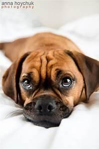 Cute Puggle Dog #puggle | Lifestyle | Pinterest