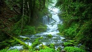 Beautiful, Forest, Waterfall, Wallpaper